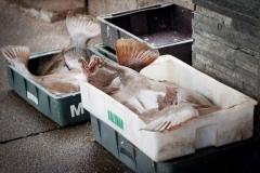 pescadores-del-puerto-de-punta-del-este-9